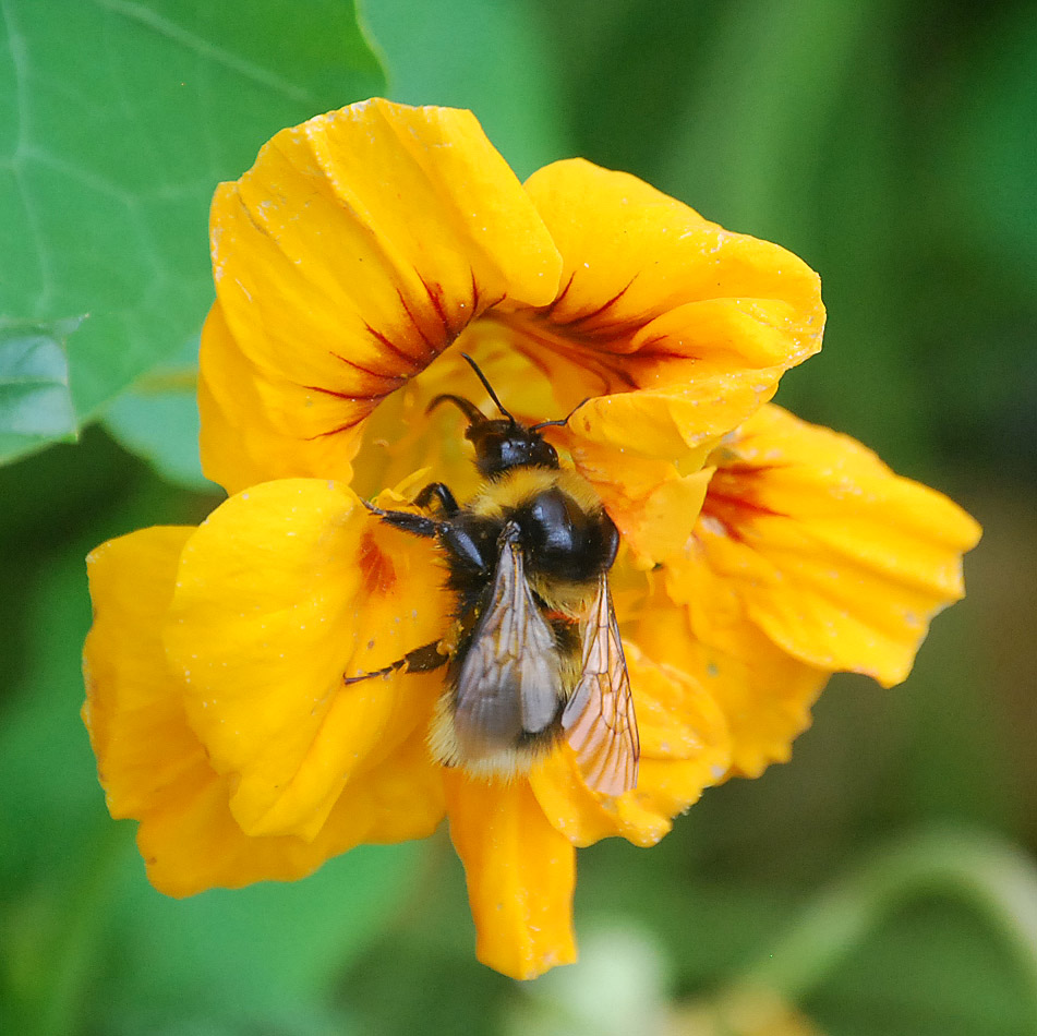 bee yellow 2.jpg